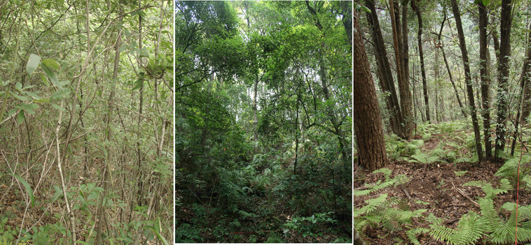 Herb layer composition in different successional stages, Gutianshan National Nature Reserve (S. Both)