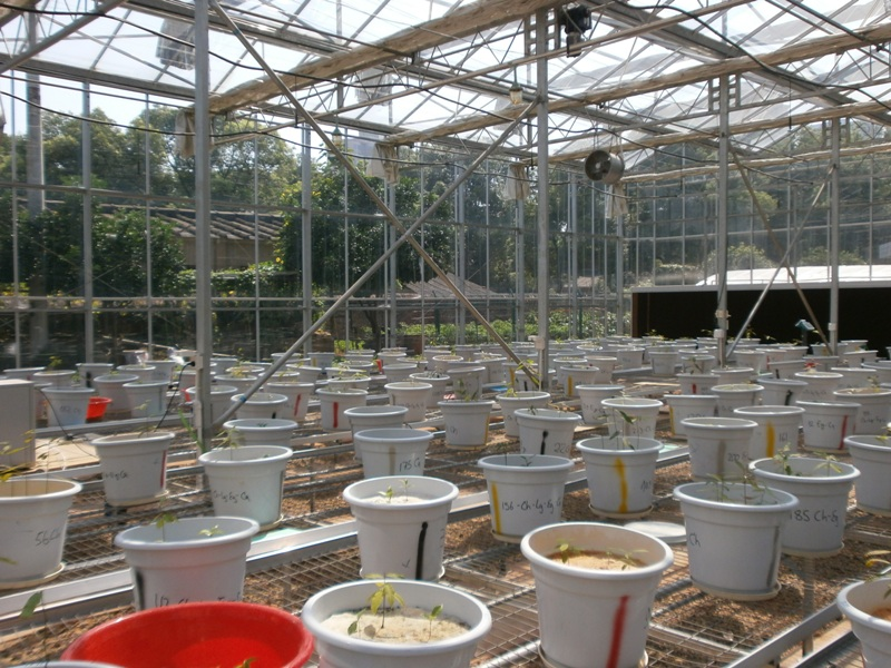 Pot experiment on tree diversity with decreasing diversity of soil P sources at Central South University of Forestry & Technology in Changsha, Hunan