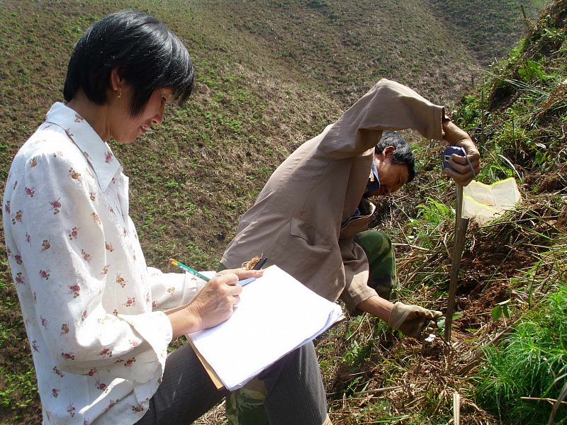 Chinese workers measuring height of tree saplings (A. Lang)