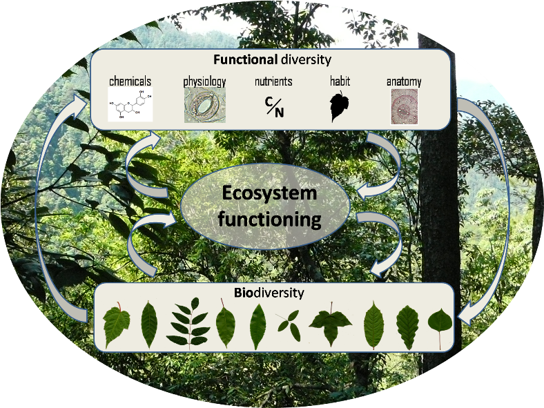 Links between biodiversity and ecosystem functioning